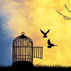 freedom-birds-cage-400x400